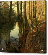 Autumn Leaves And Cypresses Acrylic Print