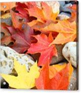 Autumn Leaves Art Print Coastal Fossil Rocks Baslee Troutman Acrylic Print