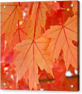 Autumn Leaves Art Prints Orange Fall Leaves Baslee Troutman Acrylic Print