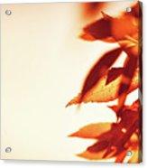 Autumn Leaves Border Acrylic Print