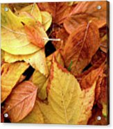 Autumn Leaves Acrylic Print by Carlos Caetano