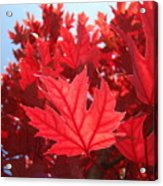 Autumn Leaves Fall Art Bright Red Leaves Baslee Troutman Acrylic Print