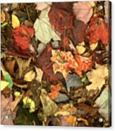 Colorful Autumn Leaves In Blue Green Red Yellow Orange Acrylic Print