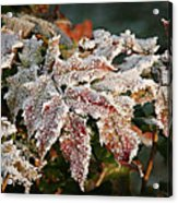 Autumn Leaves In A Frozen Winter World Acrylic Print