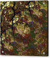 Autumn Leaves In Kyoto Acrylic Print