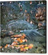 Autumn Leaves In Waterfall Acrylic Print
