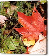 Autumn Leaves Acrylic Print by Larry Ricker