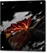 Autumn Leaves... Acrylic Print