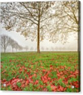 Autumn Leaves Near To Far Super High Resolution Acrylic Print