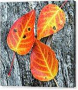 Autumn Leaves On Tree Bark Acrylic Print
