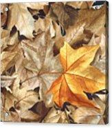 Autumn Leaves Series 2 Acrylic Print