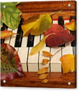 Autumn Leaves Tickle The Ivories Acrylic Print
