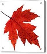 Autumn Leaves Triptych Acrylic Print