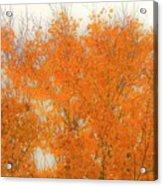 Autumn Leaves2 Acrylic Print