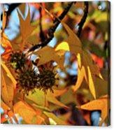 Autumn Leaves4 Acrylic Print