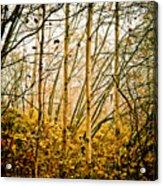 autumn Lines Acrylic Print