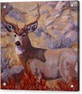 Autumn Majesty Acrylic Print by Debra Mickelson