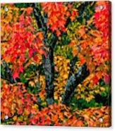 Autumn Maple Bark Acrylic Print