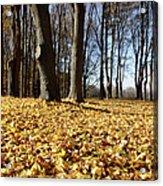 Autumn Maple Forest - Massachusetts Usa Acrylic Print