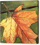Autumn Maple Leaf Acrylic Print