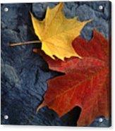 Autumn Maple Leaf Pair On Moody Rock Acrylic Print