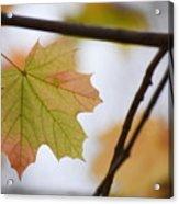 Autumn Maple Leaves Horizontal Acrylic Print