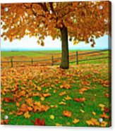 Autumn Maple Tree And Leaves Acrylic Print