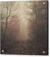 Autumn Mists Acrylic Print