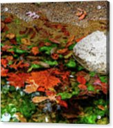 Autumn Mix Acrylic Print