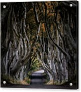 Autumn Morning At Dark Hedges Alley  Acrylic Print