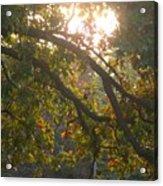 Autumn Morning Glow Acrylic Print