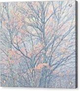 Autumn Morning Sugar Maple Acrylic Print