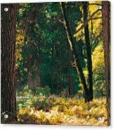 Autumn Morning Yosemite National Park Acrylic Print