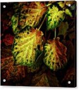 Autumn Motif Acrylic Print