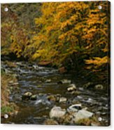 Autumn Mountain Stream Acrylic Print