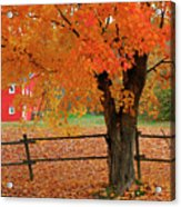 Autumn Near New Germany, Nova Scotia Acrylic Print