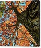Autumn Oak Acrylic Print