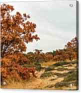 Autumn Oaks 3 Acrylic Print
