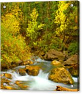 Autumn On Big Cottonwood River Acrylic Print