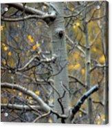 Autumn On My Mind Acrylic Print