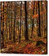 Autumn On The Ice Age Trail Acrylic Print