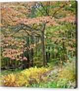 Autumn Paints A Dogwood And Ferns Acrylic Print