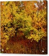Autumn Palette Acrylic Print by Carol Cavalaris