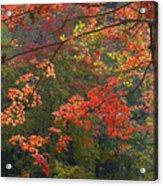 Autumn Palette Acrylic Print