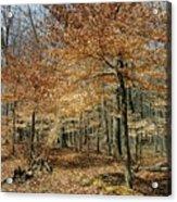 Autumn Paradise Acrylic Print