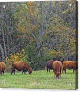 Autumn Pasture Acrylic Print