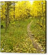 Autumn Path Acrylic Print