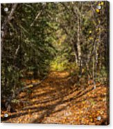 Autumn Path In Spearfish Canyon Acrylic Print