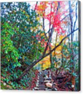 Autumn Pathway Acrylic Print