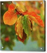 Autumn Persimmon Leaves Acrylic Print